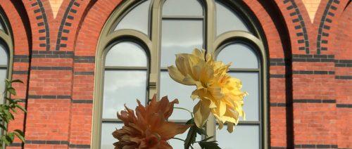 flowers by LynnVale Studios, Smithsonian