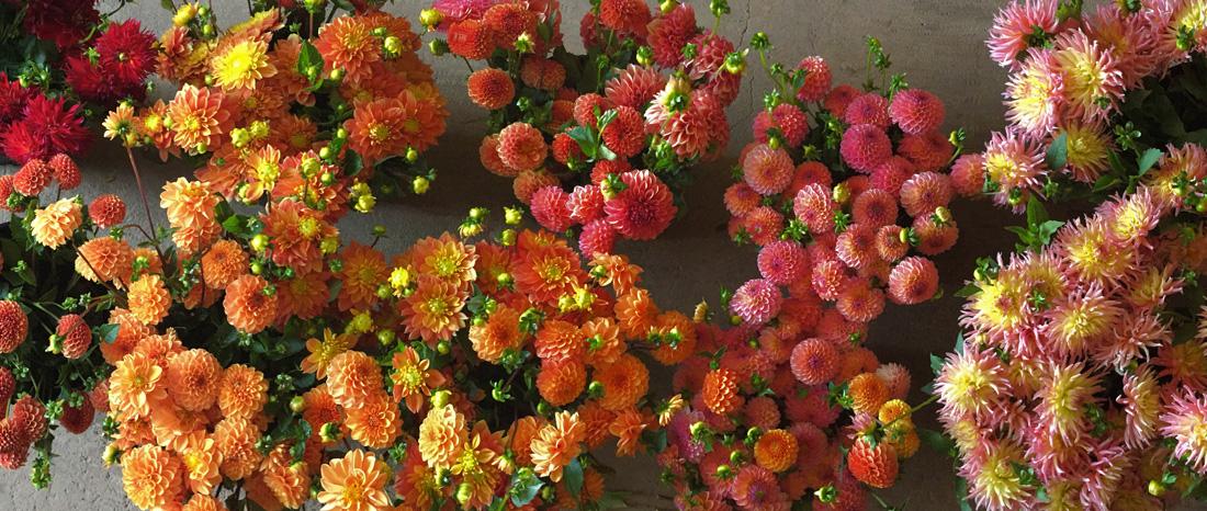 flowers by season