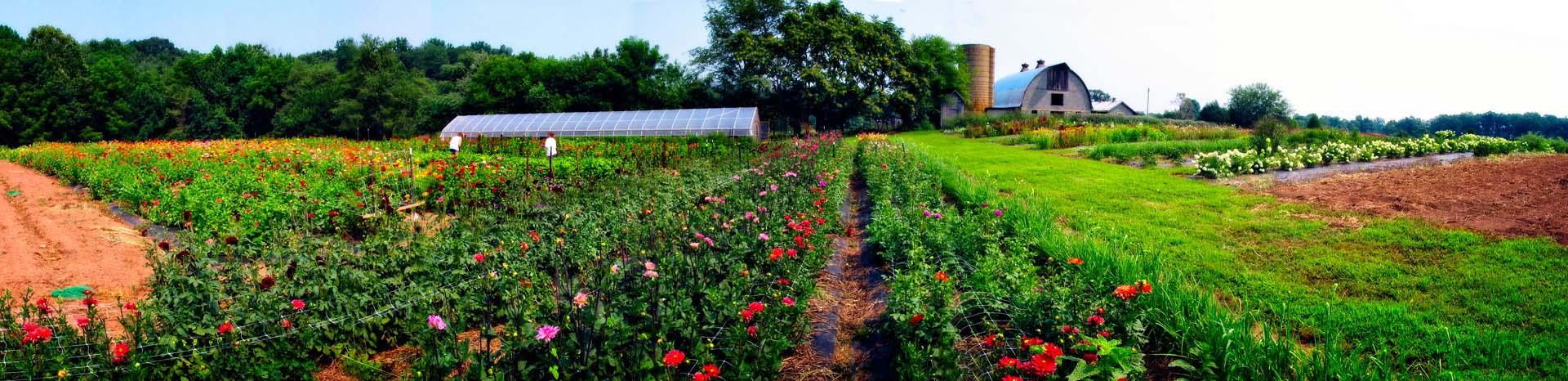 Flower Farm Farmer Florist Studios Lynnvale Studios Llc