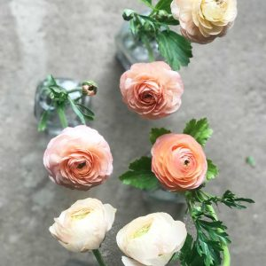 Ranunculus at LynnVale Farm